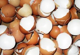 casca de ovo adubo poderoso
