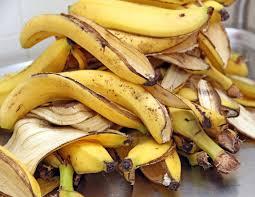 casca de banana adubo poderoso