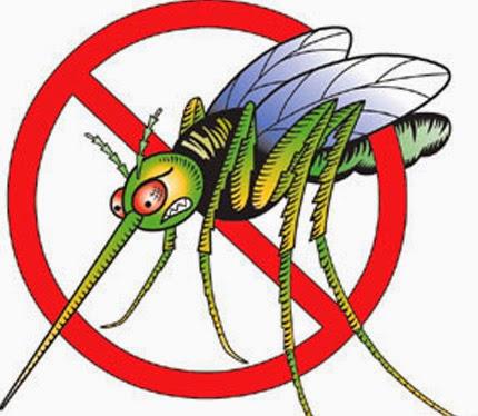 Época de chuva, época de mosquitos!