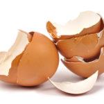 Adubo com casca de ovo – Os erros que se podem evitar