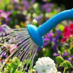 Como irrigar as plantas – Algumas dicas para evitar um dos maiores erros em casa