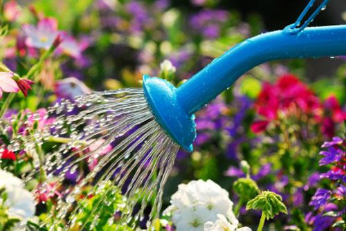como irrigar as plantas