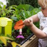 Como plantar em vaso uma semente. Uma pequena ajuda