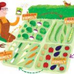 A rotação de culturas. A técnica que ajuda as hortaliças